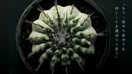 橋本絵莉子波多野裕文、植物を4Kカメラで撮影した新曲「飛翔」リリックビデオ公開