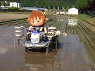 タボくんの田植え写真