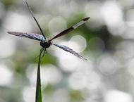 「Swallowtail Butterfly」イメージ画像